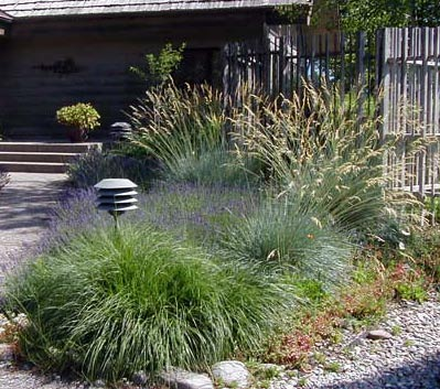 Picture of ornamental grass garden for Ornamental grass garden