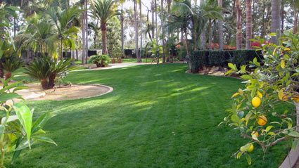 Drought Tolerant Low Water Low Maintenance Lawn Seed