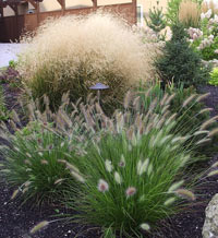 Ornamental grasses for landscaping gardening in borders for Seagrass landscaping